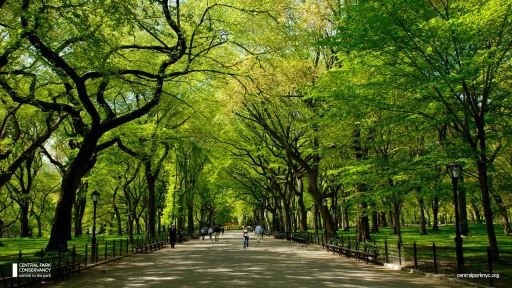 Central Park Elms